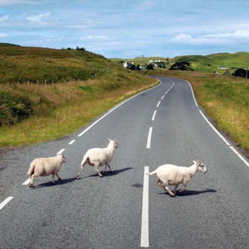 hands-on-travel-deaf-tours-scotland-sheep