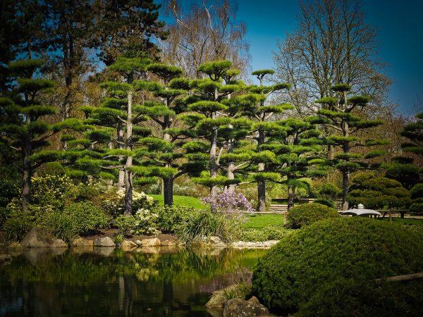 hands-on-travel-deaf-tours-japan-cedar-tree
