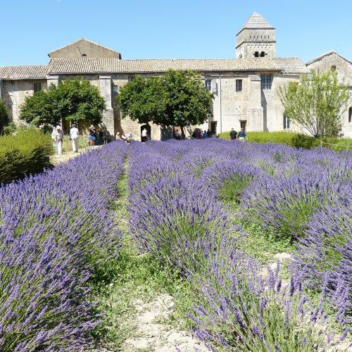 deaf-tours-hands-travel-france-lavender