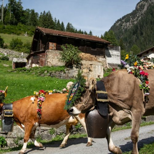 hands-on-travel-deaf-tours-switzerland-cows-bells